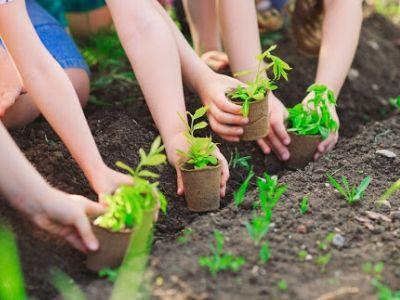 Clean and Green School Program