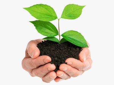 City Based Plantation Program