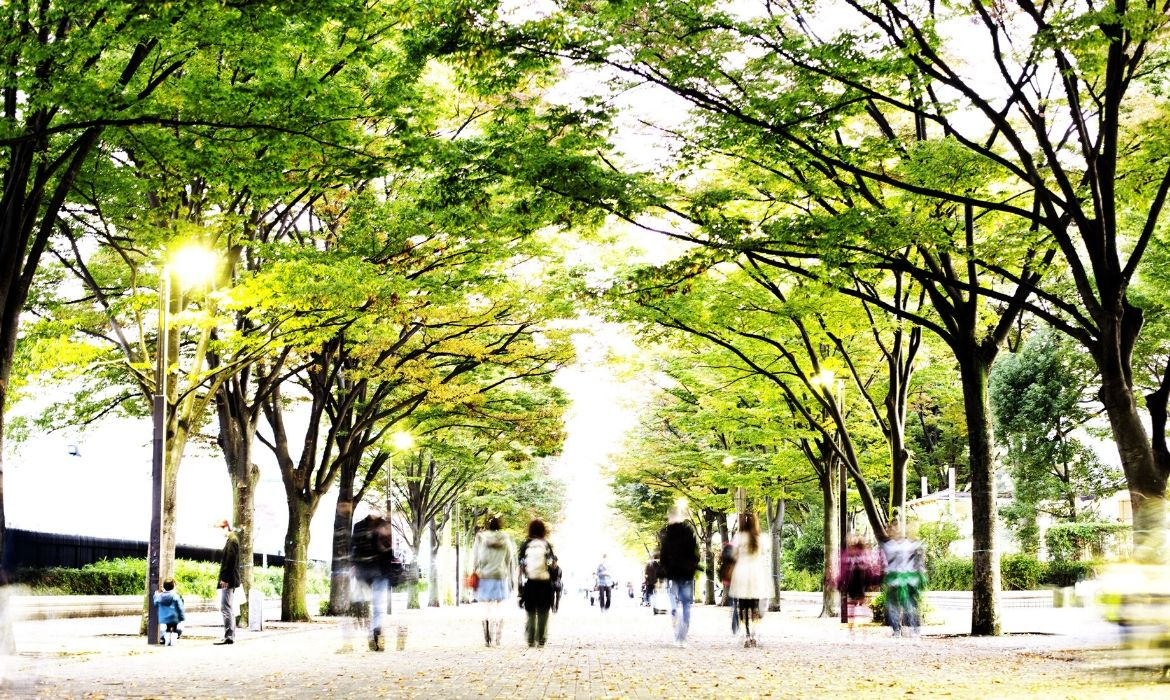 11 REASONS WHY WE NEED TO PLANT MORE TREES