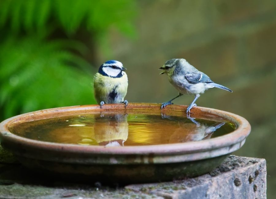 Water for Birds & Animals